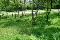 Coco Bay Estates Nature Lot 42