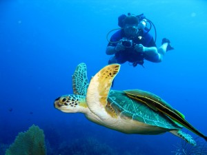 Scuba Diving in Playas del Coco - Sea Turtle
