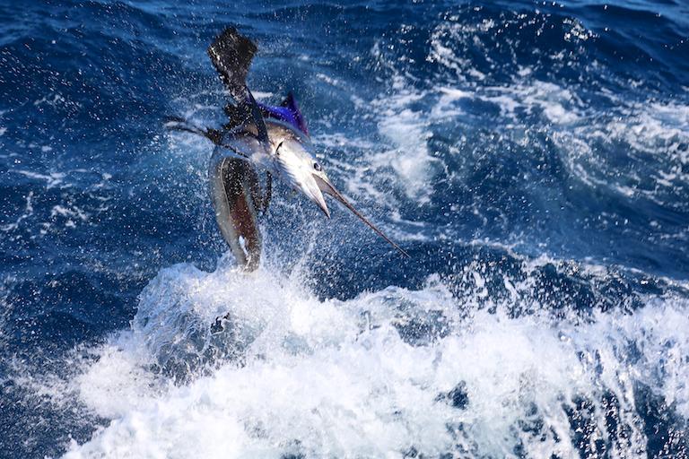 Sportfishing Danny 042