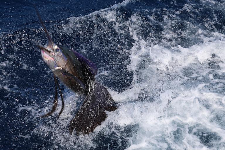 Sportfishing Danny 048
