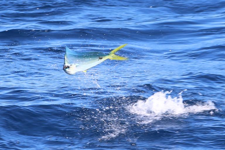 Sportfishing Danny 068