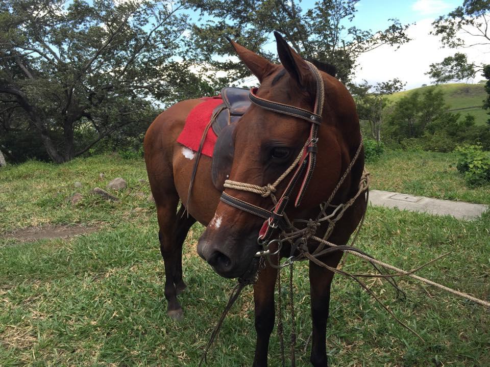 Borinquen Horses