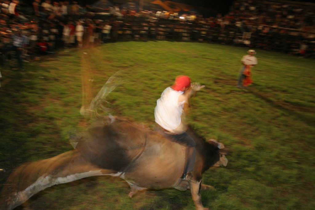 Man riding a bull in Costa Rica