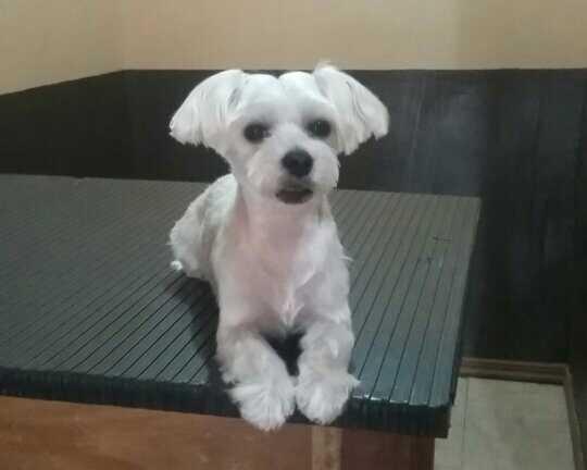 dog groomers in costa rica